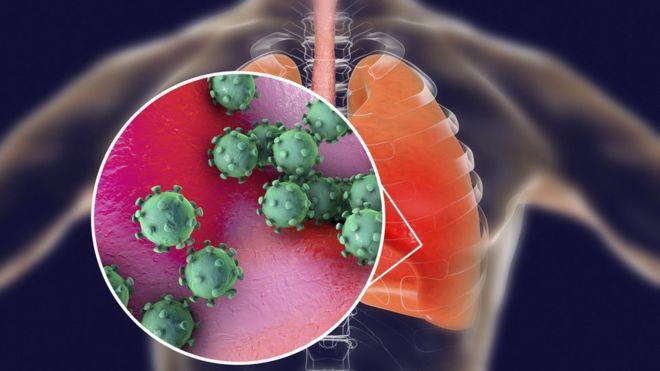 Coronavirus History