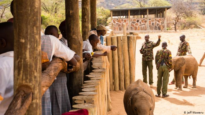Corona-hit tourism in Kenya leaves elephant conservation 'staring at an uncertain future'