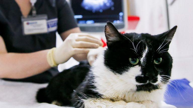 Coronavirus: Pet cat found to have virus in UK
