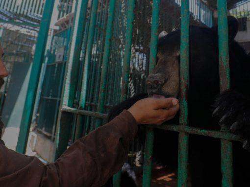 تدابير الحجر الصحي بسبب كورونا تنعكس بازدياد الولادات في حديقة حيوانات بكولومبيا